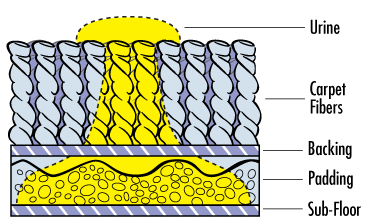 pet urine removal