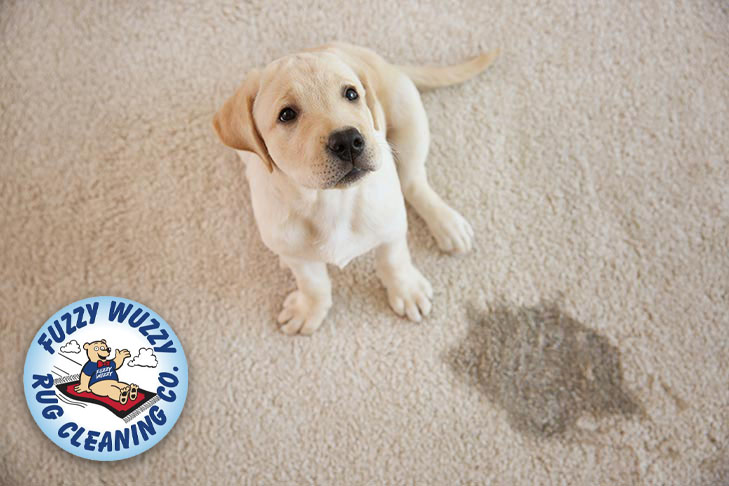 How To Get Dog Out Of Carpet Complete Guide